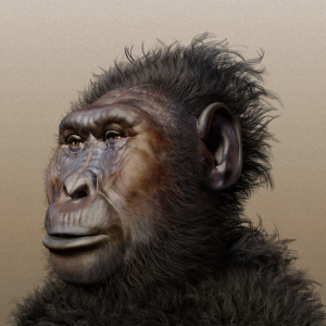 Paranthropus boisei (Nutcracker Man) - Wikipedia Commons